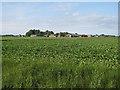 TF4804 : Needham Lodge Farm by Hugh Venables