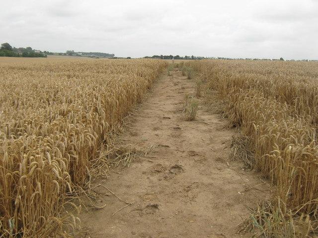 Bridleway to Bossington Farm
