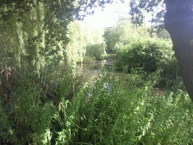 The Long Pond at Eltham Park North