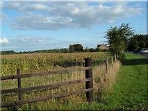 SU5404 : Corn field by Margaret Sutton