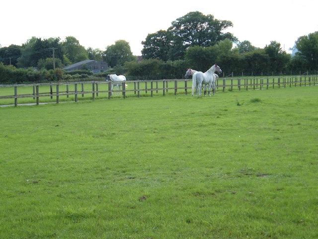 Stud Farm paddock