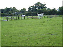 SU6514 : Stud Farm paddock by Margaret Sutton