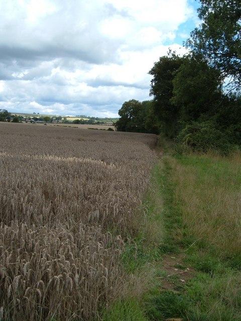 Path between Park Wood and Chidden Holt