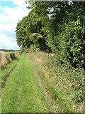 SU6517 : Bridleway at Chidden by Margaret Sutton