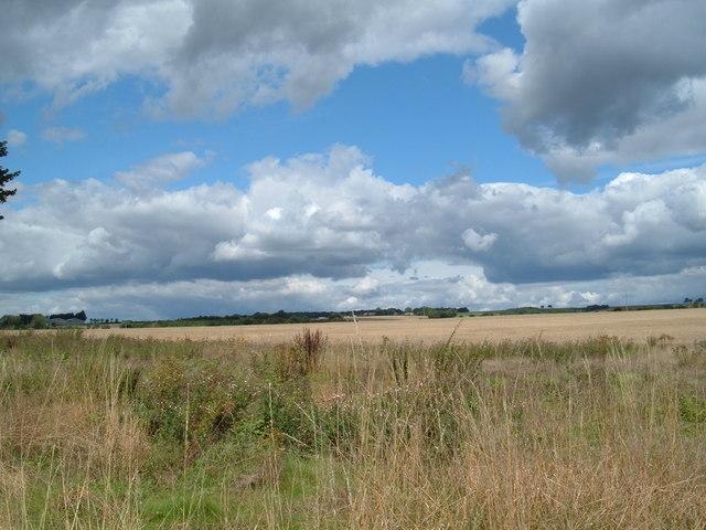 Field near Chidden