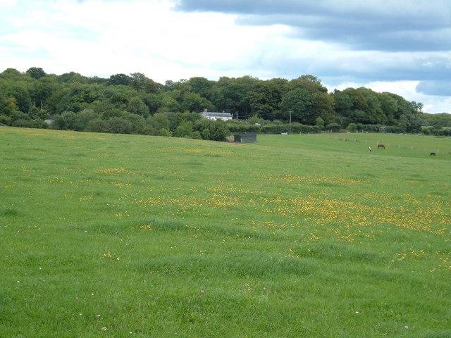 Field near Clanfield