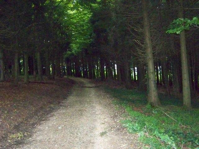 Monarch's Way near to Hambledon