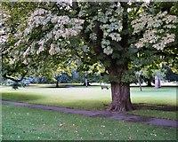 ST7565 : Henrietta Park by Paul Gillett