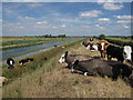 TL4177 : Chain Corner, Ouse Washes by Hugh Venables