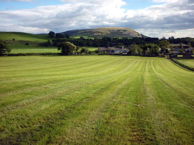 Newly mown field below St Patrick's Church, Preston Patrick