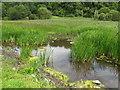 R6441 : Reedy area by Lough Gur by David Hawgood