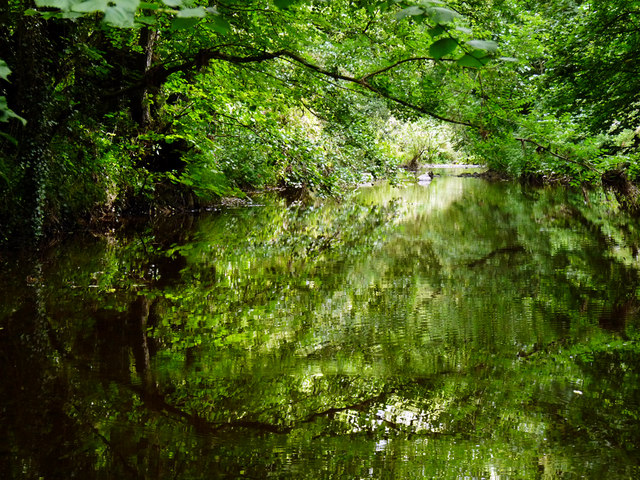 River Leven in Hilton Wood