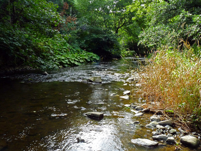 River Leven through Scriddles Wood