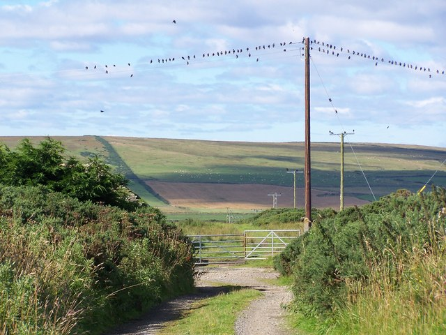 Birds on the wire, South Weydale