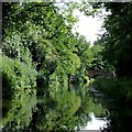 SJ9001 : Staffordshire and Worcestershire Canal near Oxley, Wolverhampton by Roger  Kidd