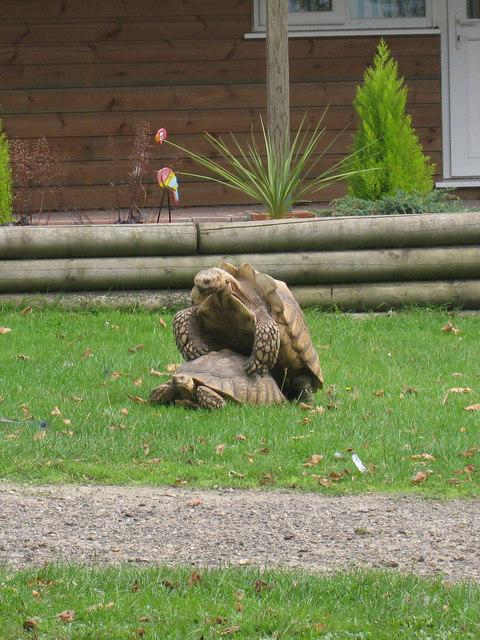 Tortoise at Wingham Wildlife Park