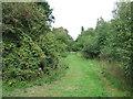TF6922 : Path on dismantled railway line, Roydon by Richard Humphrey