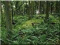 NS4884 : Earthworks in Knockinhaglish Wood by Lairich Rig