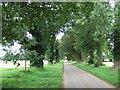 TF7019 : Church Lane, Ashwicken, Norfolk by Richard Humphrey
