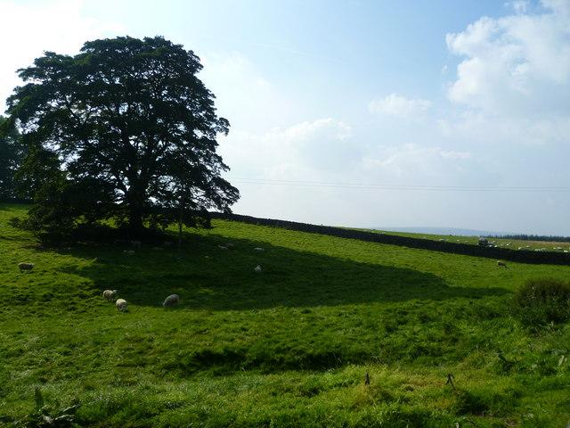 Pasture above Brock Thorn