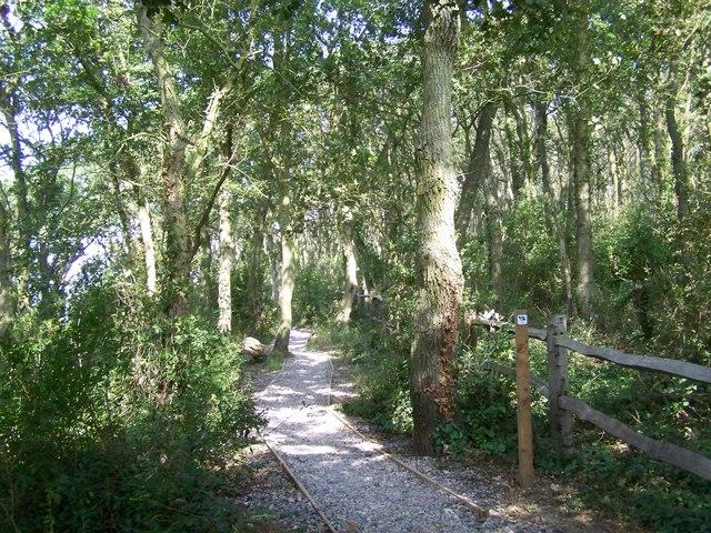 Path through Saltern's Copse.