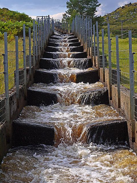 Salmon Ladder at the Gaur Dam