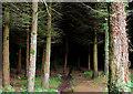 J3369 : Moreland's Meadow, Belfast (3) by Albert Bridge