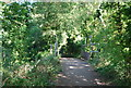 TQ0242 : Small bridge on the Downs Link by N Chadwick