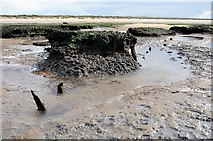 TF7045 : A drowned forest, Holme dunes NNR beach by Julian Dowse