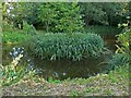 SO7978 : Small pond next to Habberley Lane by Mat Fascione