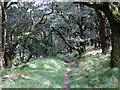 SN0936 : In the woods by ceridwen