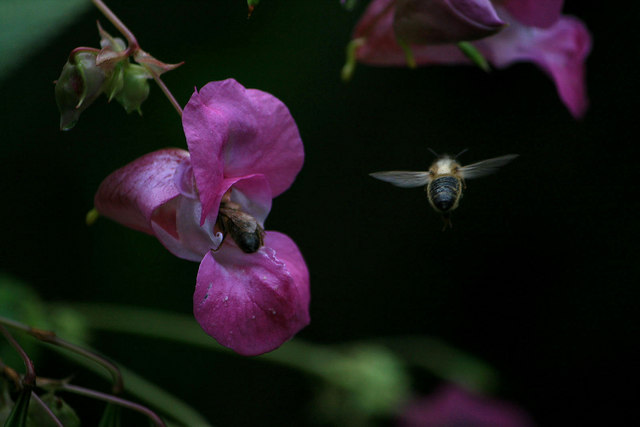 Feeding Honey Bees
