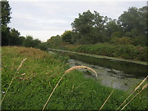 TR1859 : River Great Stour by David Anstiss