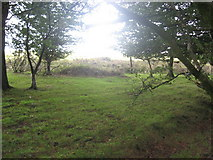 ST1636 : Rough grazing edging onto woodland by Dr Duncan Pepper