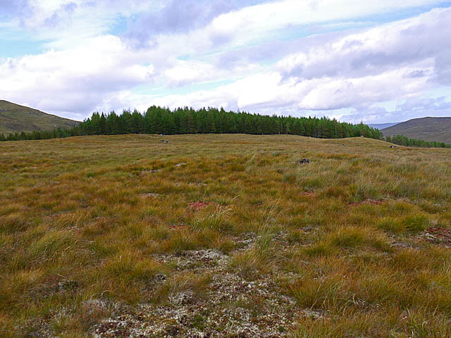 Moorland and forestry plantation