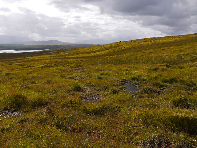 Moorland and bog