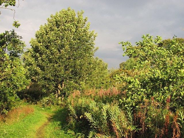 Path, Blackburn