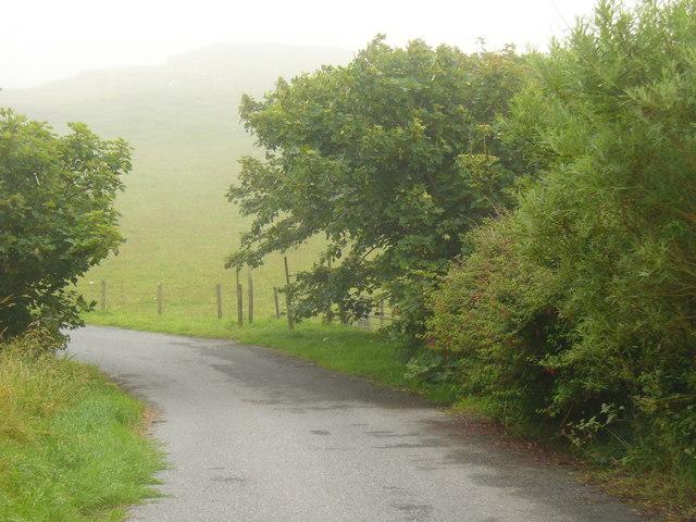 Trees in Shetland