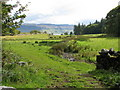 NM4438 : Field on Ulva by Sarah Charlesworth