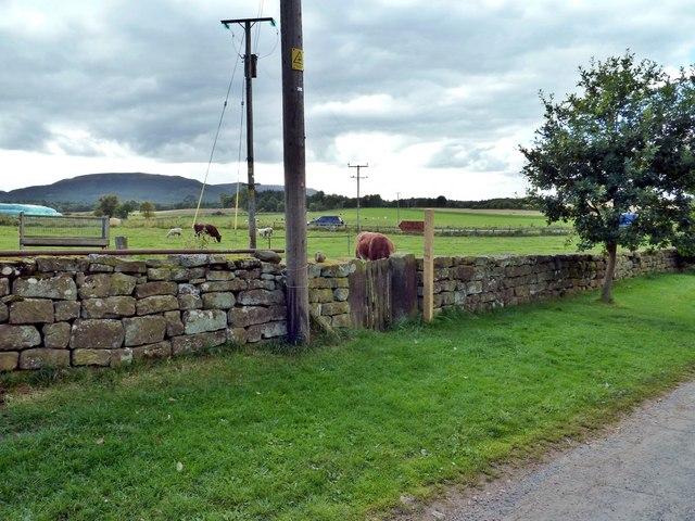 Footpath Finger Post, Bank Foot Farm