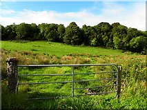 G9371 : Carrickbreeny Townland by Kenneth  Allen