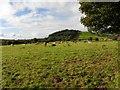 G9370 : Ballintooey Townland by Kenneth  Allen