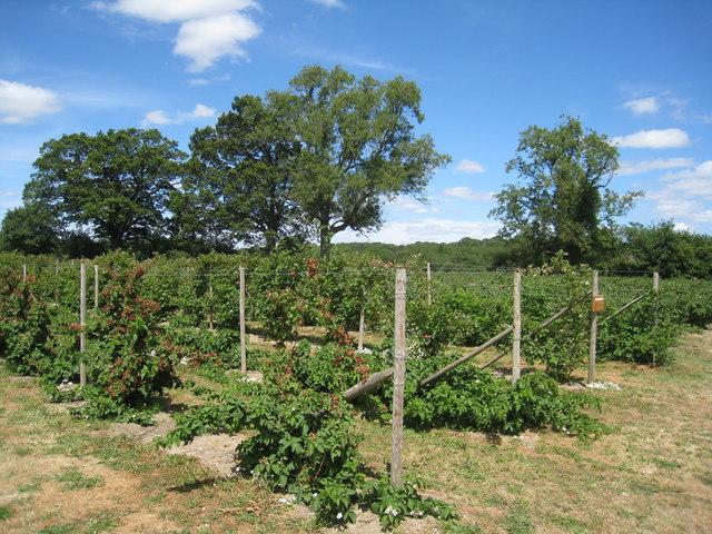 West Green Fruits - PYO fruit farm
