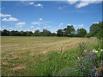 SU7556 : Typical Hampshire countryside by Given Up