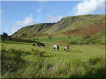SN8056 : Grazing in the upper Tywi valley, Ceredigion by Roger  Kidd