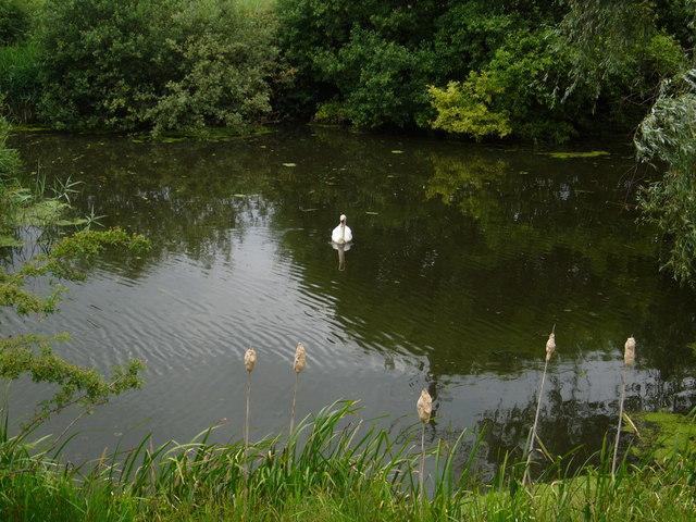 The Market Weighton Canal near Mill Lock