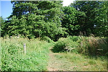 SU9948 : North Downs Way just west of the bridge across the River Wey by N Chadwick