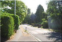 SU9948 : Speed bump, Pilgrims' Way by N Chadwick