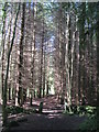 NY8060 : Path in Stawardpeel Wood by Mike Quinn