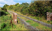 J4681 : Lane, Helen's Bay/Crawfordsburn (1) by Albert Bridge